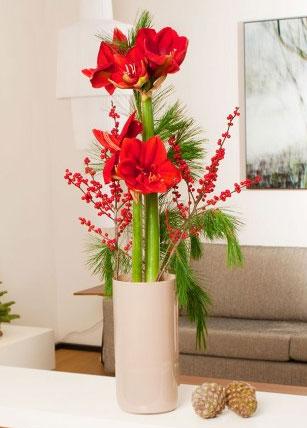 Blumen Wintermärchen für 13,80€ bei Miflora   rote Amaryllis, Seidenkiefer, roter Ilex