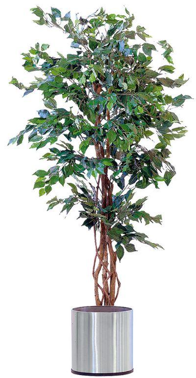 Kunstpflanze Ficus Benjamini 170 cm für 49,99€