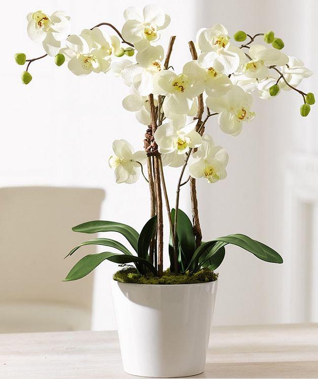 Elegance   Kunstpflanze Orchideentopf für 19,99€ & verschiedene Fototapeten max 400x280cm für je 29,95€